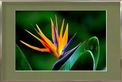 Zoom on strelitzia from Pierre Gaultier, Prodi Art, Art photography, Framed artwork, Prodi Art
