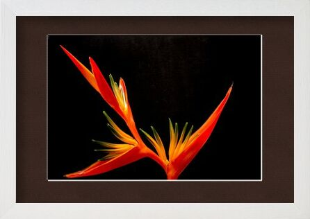 Colors of an orchid from Pierre Gaultier, Prodi Art, Art photography, Framed artwork, Prodi Art