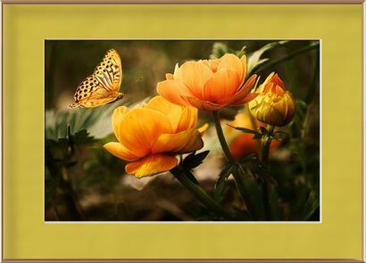 The butterfly and its plant from Pierre Gaultier, Prodi Art, Art photography, Framed artwork, Prodi Art