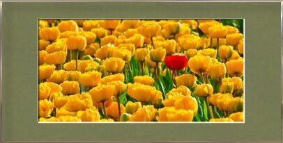 Fields of tulips from Pierre Gaultier, Prodi Art, Art photography, Framed artwork, Prodi Art