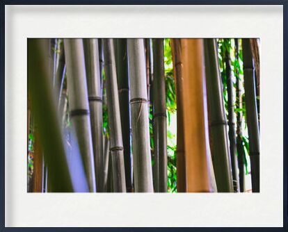 Bambous de Loïse Raoult, VisionArt, Photographie d'art, Œuvre encadrée, Prodi Art