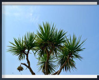 Palmier de Loïse Raoult, VisionArt, Photographie d'art, Œuvre encadrée, Prodi Art