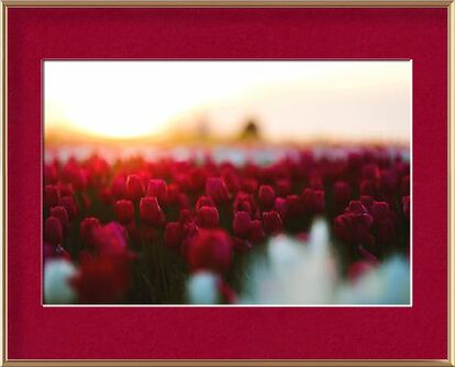 Rouge tulipe from Aliss ART, Prodi Art, Art photography, Framed artwork, Prodi Art