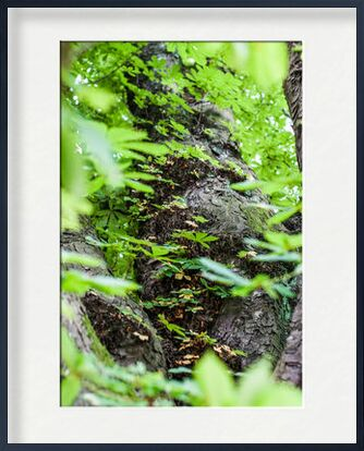 Voyage au coeur de la Nature from Marie Guibouin, VisionArt, Art photography, Framed artwork, Prodi Art