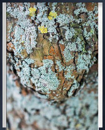 Porter la vie from Marie Guibouin, VisionArt, Art photography, Framed artwork, Prodi Art