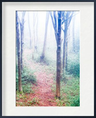 Dans les bois from Marie Guibouin, VisionArt, Art photography, Framed artwork, Prodi Art