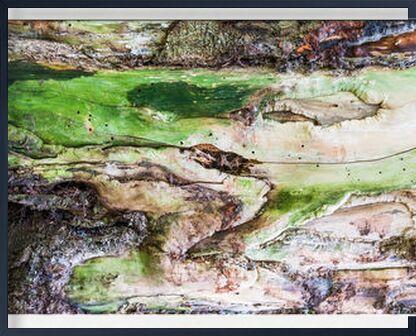 Le bois vert de Marie Guibouin, VisionArt, Photographie d'art, Œuvre encadrée, Prodi Art