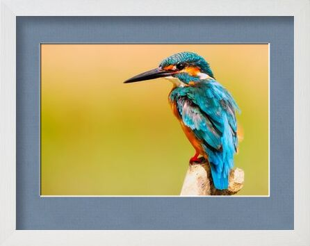 Kingfisher from Pierre Gaultier, VisionArt, Art photography, Framed artwork, Prodi Art