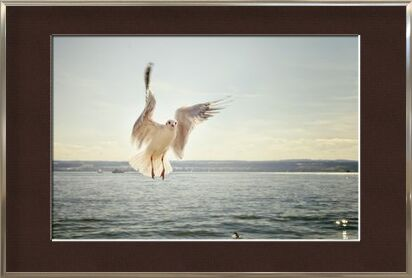 The approach of the seagull from Pierre Gaultier, Prodi Art, Art photography, Framed artwork, Prodi Art