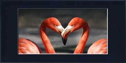 Couple of flamingo from Pierre Gaultier, Prodi Art, Art photography, Framed artwork, Prodi Art