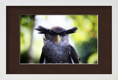Owlet from Pierre Gaultier, Prodi Art, Art photography, Framed artwork, Prodi Art