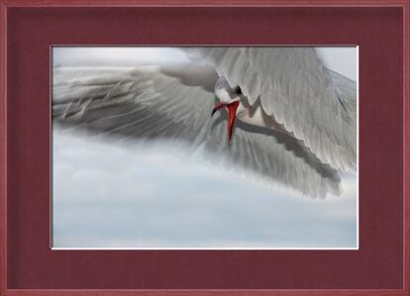 The gull race from Pierre Gaultier, Prodi Art, Art photography, Framed artwork, Prodi Art