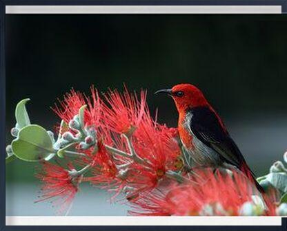 Bird on plant from Pierre Gaultier, Prodi Art, Art photography, Framed artwork, Prodi Art