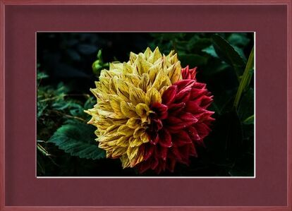 Flower of the islands from Pierre Gaultier, Prodi Art, Art photography, Framed artwork, Prodi Art