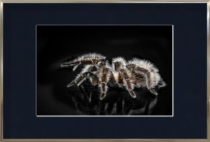 The spider from Pierre Gaultier, Prodi Art, Art photography, Framed artwork, Prodi Art