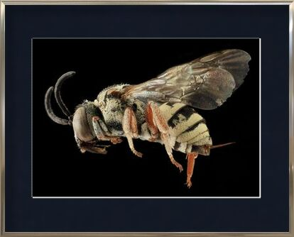Insect on black background from Pierre Gaultier, VisionArt, Art photography, Framed artwork, Prodi Art