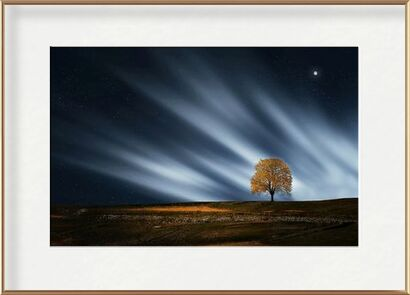 The night tree from Pierre Gaultier, VisionArt, Art photography, Framed artwork, Prodi Art