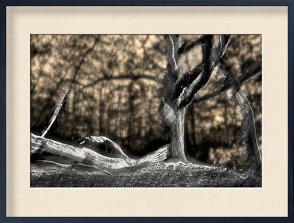 The shadow of the trunk from Adam da Silva, Prodi Art, Art photography, Framed artwork, Prodi Art