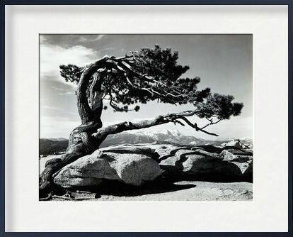 Jeffrey Pine, Sentinel Dome - ANSEL ADAMS 1940 from Aux Beaux-Arts, VisionArt, Art photography, Framed artwork, Prodi Art