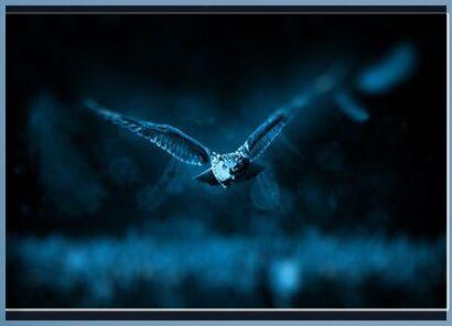 Owl from Aliss ART, Prodi Art, Art photography, Framed artwork, Prodi Art