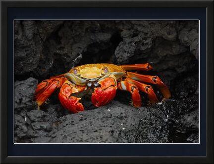 Crab from Aliss ART, Prodi Art, Art photography, Framed artwork, Prodi Art