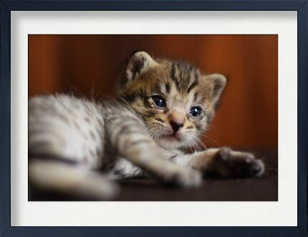 petit chaton from ivephotography, VisionArt, Art photography, Framed artwork, Prodi Art