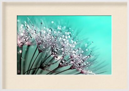 Morning dew from Aliss ART, Prodi Art, Art photography, Framed artwork, Prodi Art