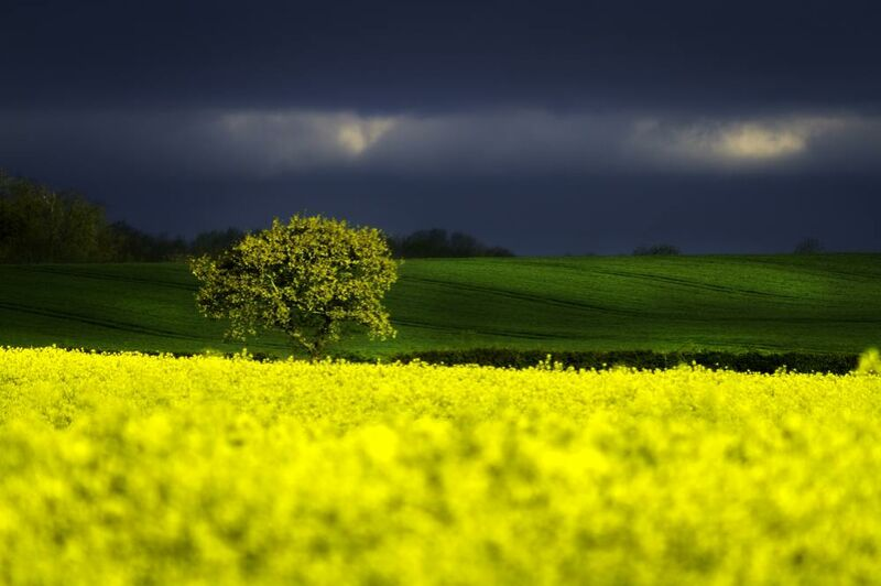 The yellow field from Pierre Gaultier Decor Image