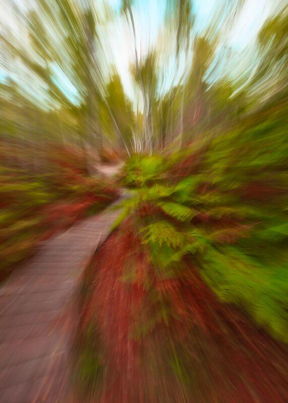 L'escalier en forêt de Céline Pivoine Eyes Decor Image