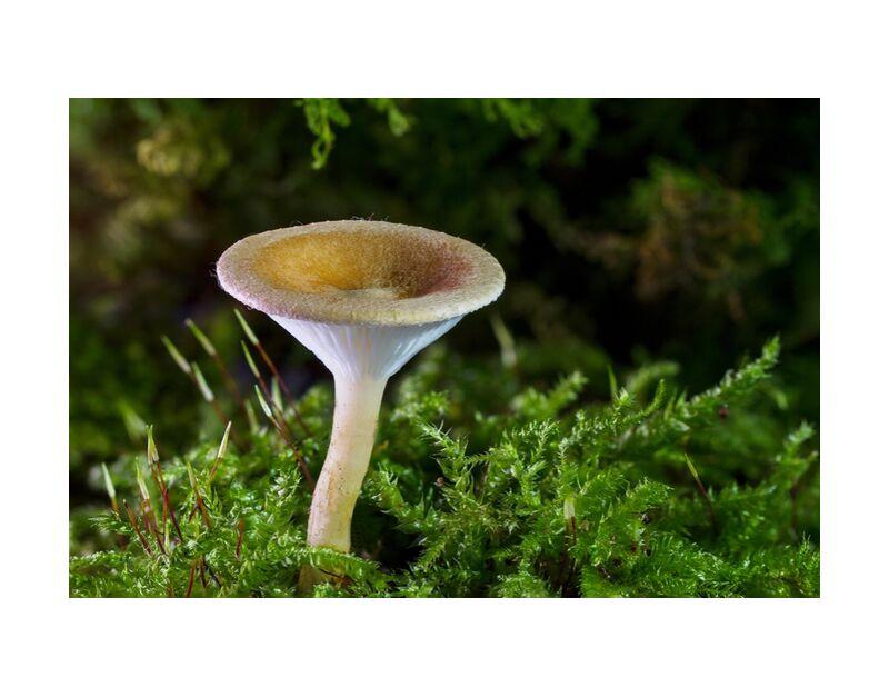 Mushroom on moss from Pierre Gaultier, Prodi Art, forest, champignon, mini mushroom, sponge, small mushroom, moss, autumn