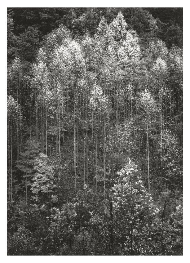 Aube, automne, Parc National des Great Smoky Mountains, Tennessee - Ansel Adams de AUX BEAUX-ARTS, Prodi Art, ANSEL ADAMS, Aube, neige, hiver, forêt, arbres, Autonome