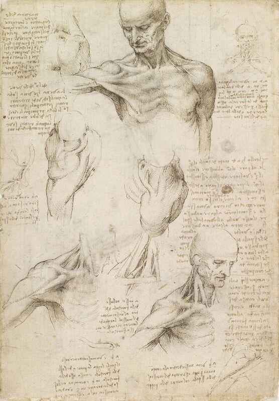 Anatomie superficielle de l'épaule et du cou (recto) - Léonard de Vinci de AUX BEAUX-ARTS Decor Image