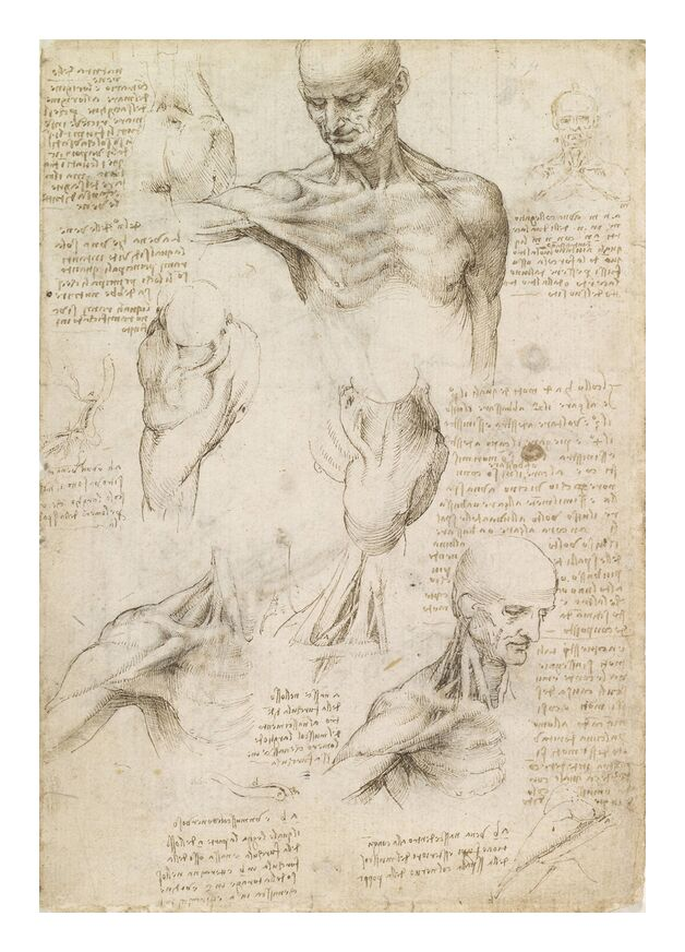 Anatomie superficielle de l'épaule et du cou (recto) - Léonard de Vinci de AUX BEAUX-ARTS, Prodi Art, Leonard da vinci, dessin, crayon, corps humain, anatomie