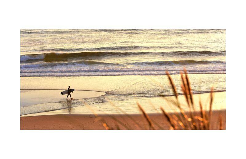 Came de Romain DOUCELIN, Prodi Art, le surf, des sports, nature, océan, eau, France, pays, plage, herbe, soleil, coucher du soleil, homme, gens, gens, insolite, vague, planche, loisir, vie quotidienne, SURFEUR, LANDAISE, ENVIRONEMENT, PLANCHE DE SURF