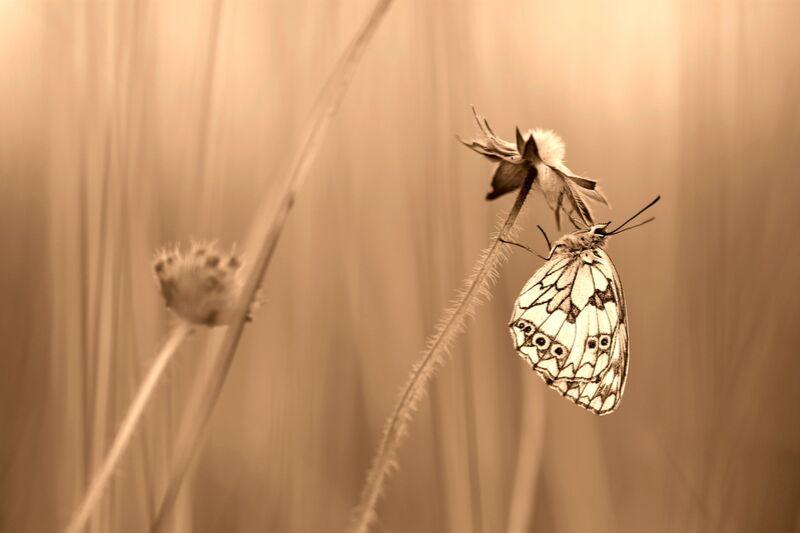 Serenity de Romain DOUCELIN Decor Image