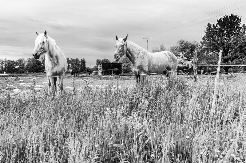 The Horses from Caro Li Decor Image