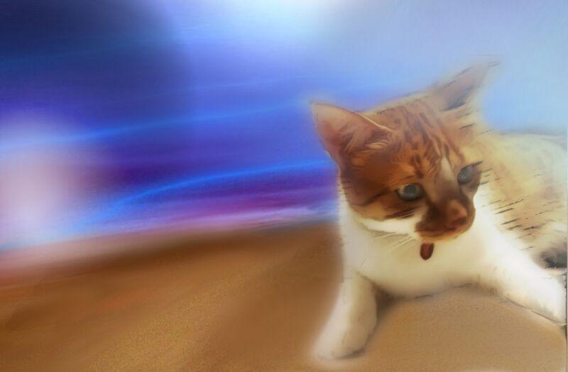 The cat from Adam da Silva Decor Image