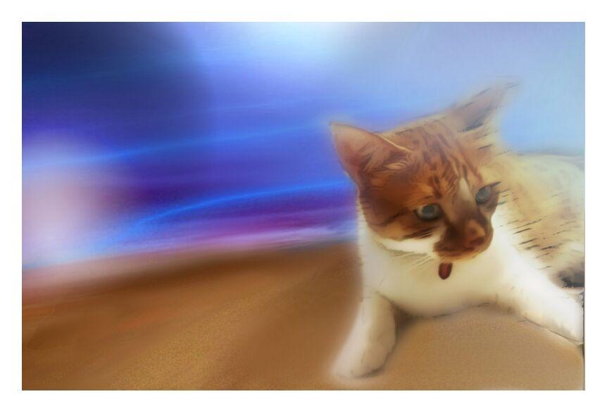 The cat from Adam da Silva, Prodi Art, Cat