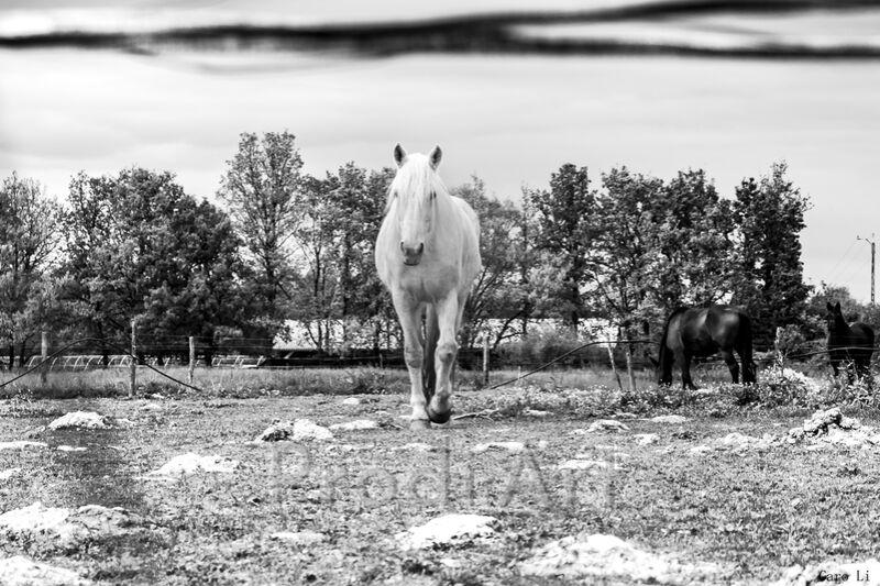 Le cheval de Caro Li Decor Image