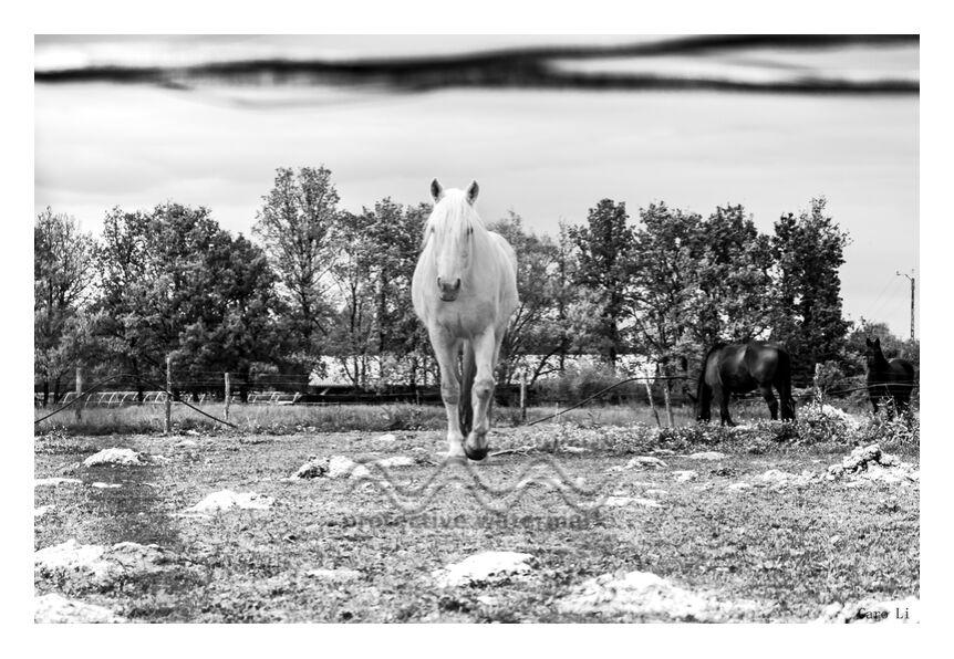 Le cheval de Caro Li, Prodi Art, paysage, Cher Li, nature, cheval