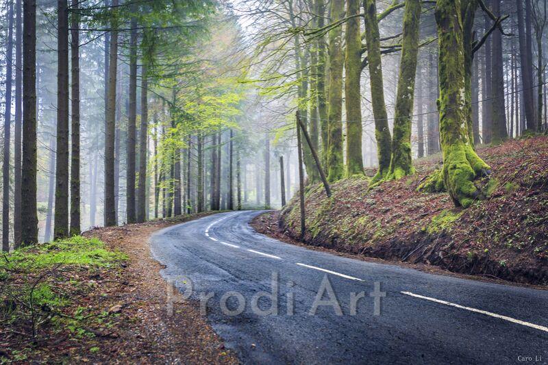 The way from Caro Li Decor Image