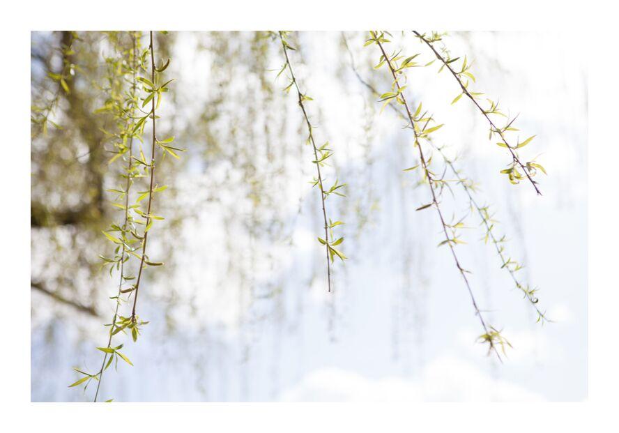 Légèreté from Stéphanie Bobault, Prodi Art, champetre, tree, spring, nature