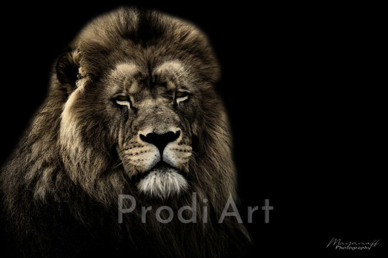 Le Roi de la savane de Mayanoff Photography Decor Image