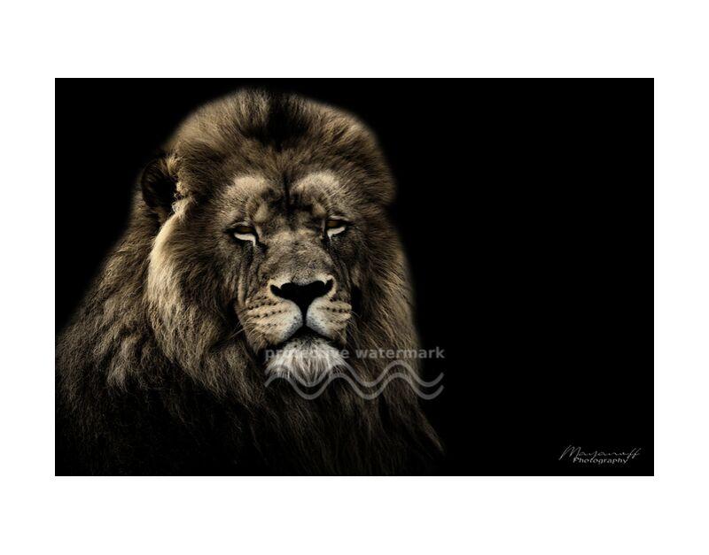 Le Roi de la savane de Mayanoff Photography, Prodi Art, Lion, faune, portrait de la faune, portrait animalier, faune sauvage