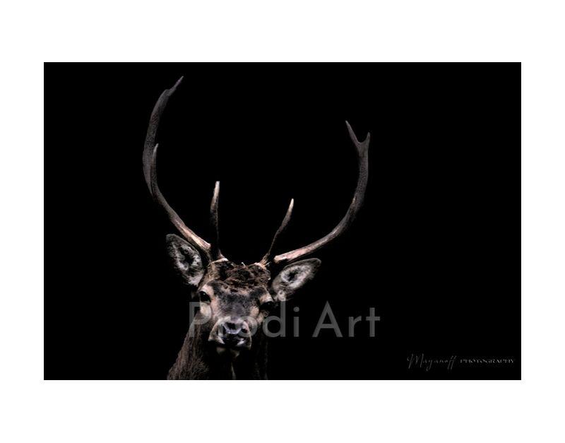 The woodland ghost from Mayanoff Photography, Prodi Art, wild animals, animal, portrait, wood, deer