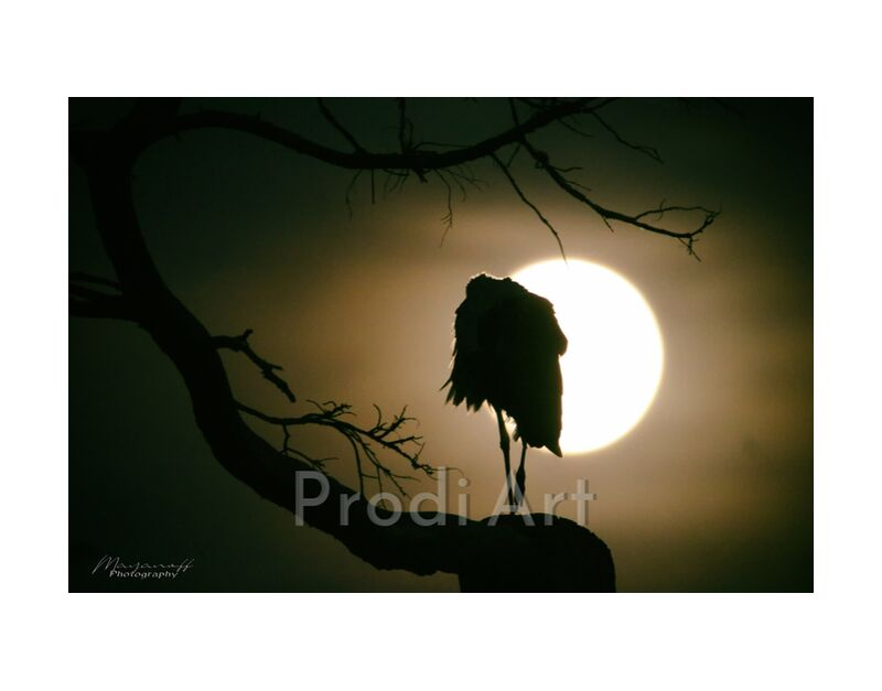 Lunar rest... from Mayanoff Photography, Prodi Art, bird, full moon, night, tree, resting, nature, rest, stork, hold, migration, stop