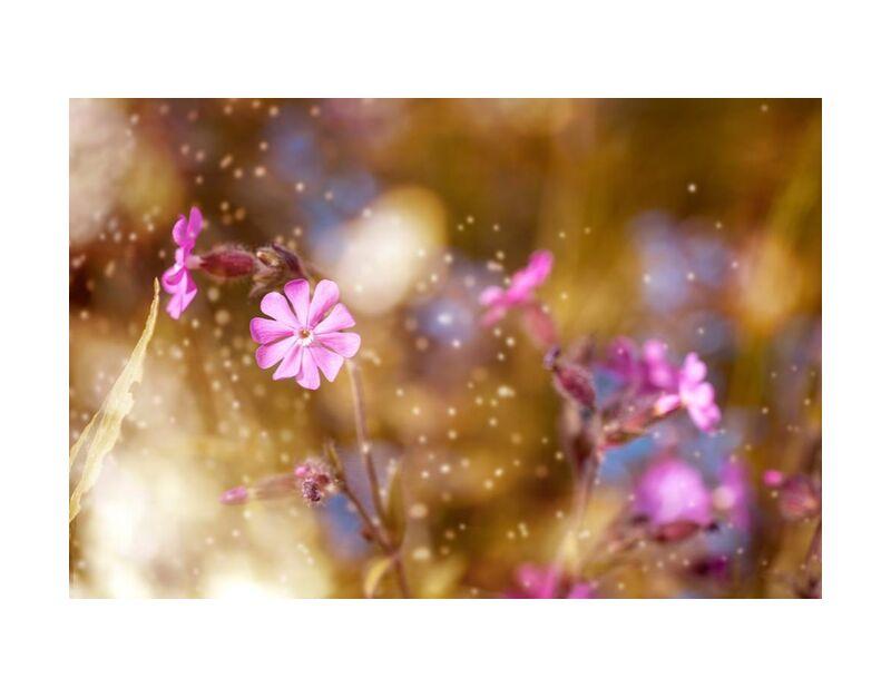 Fleurs au vent de Pierre Gaultier, Prodi Art, Floraison, épanouissement, fleur, brouiller, gros plan, délicat, profondeur de champ, flore, fleurs, concentrer, croissance, majestueux, nature, pétales