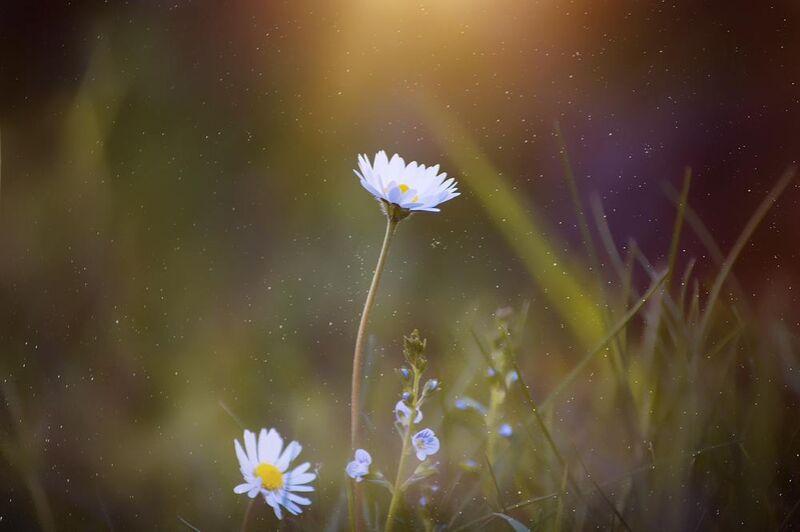 Sunshine from Pierre Gaultier Decor Image
