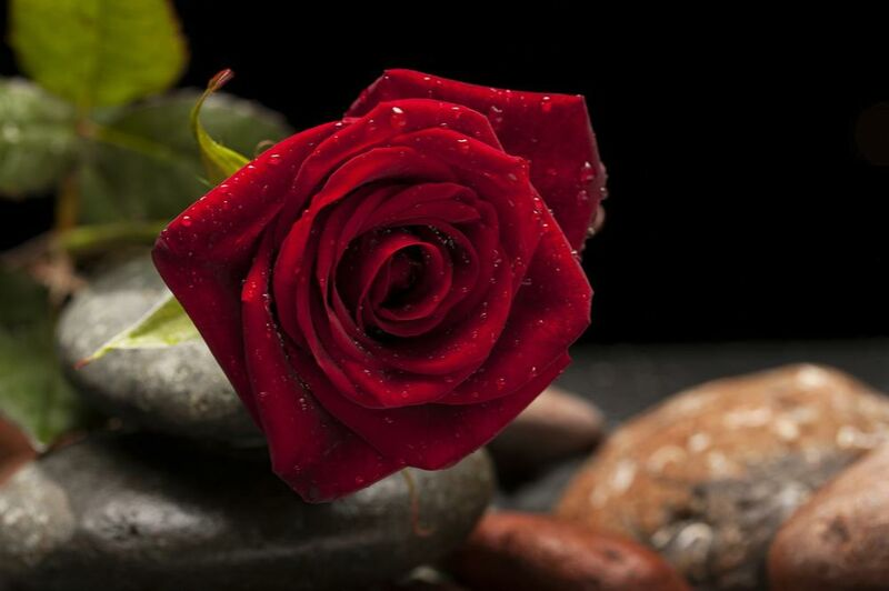 The Red Rose from Pierre Gaultier Decor Image
