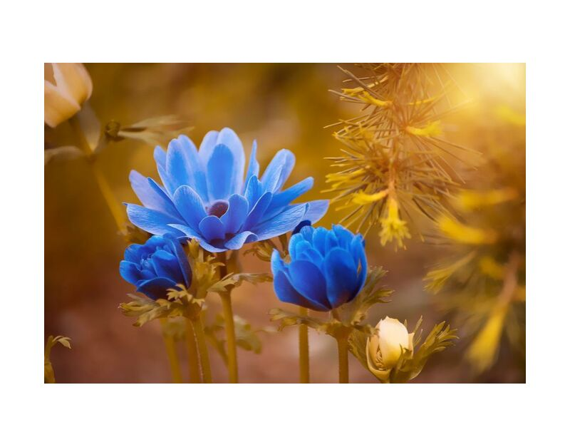Wild flower from Pierre Gaultier, Prodi Art, bloom, blooming, blossom, blur, close-up, delicate, depth of field, flora, flower buds, flowers, focus, growth, macro, nature, petals, wildflower